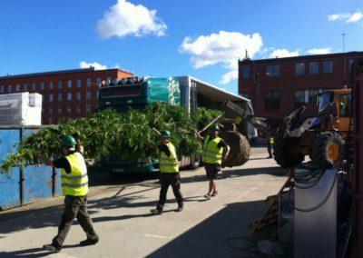 Plantering träd, Mobilia Malmö. Kvalitet 30-35