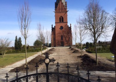 Källstorps kyrka Acer 'Freemanii'